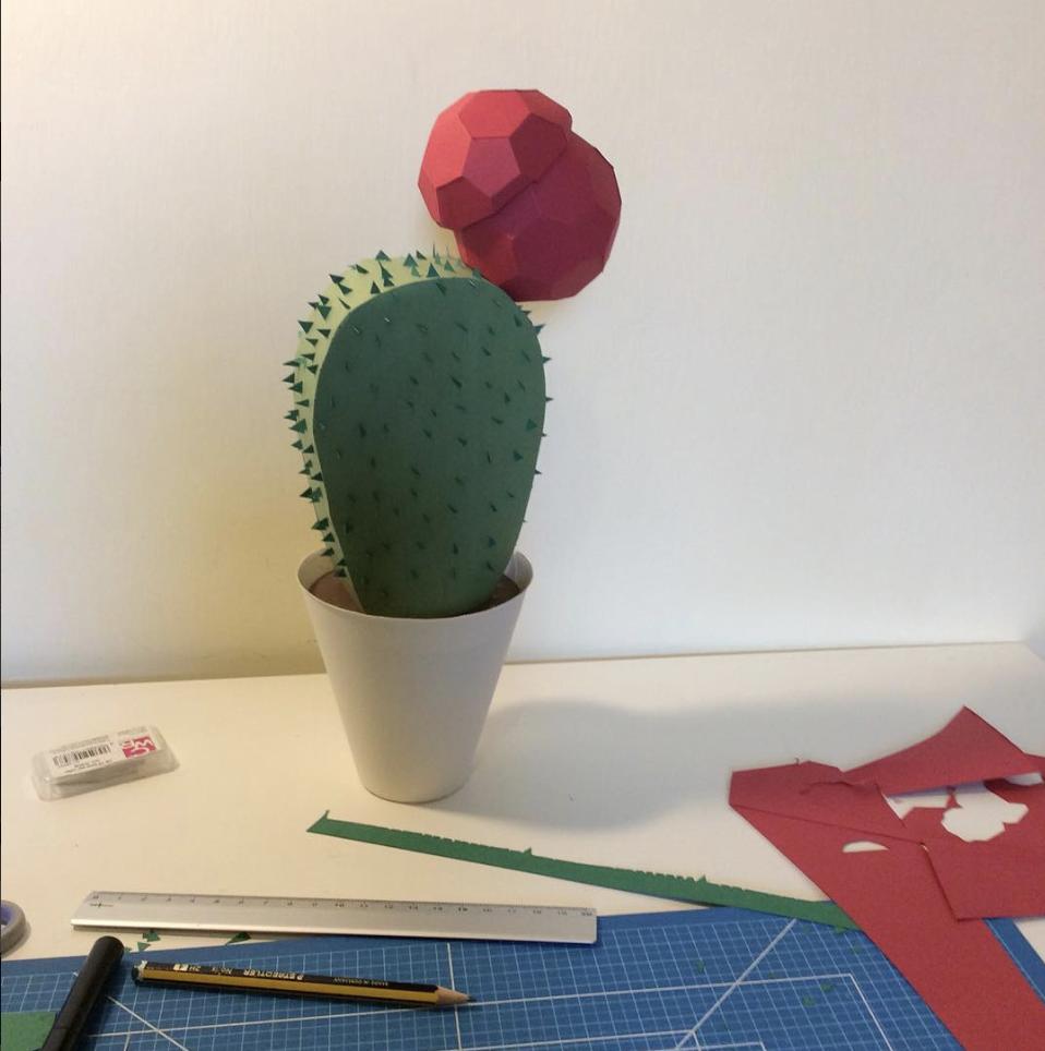 Elisabetta Quaraniello-cactus